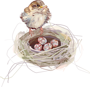 Nest PNG Background PNG Clip art