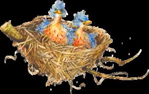 Nest PNG Download Image PNG Clip art