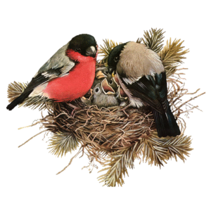 Nest PNG File Download Free PNG Clip art