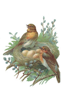 Nest PNG Free Image PNG Clip art