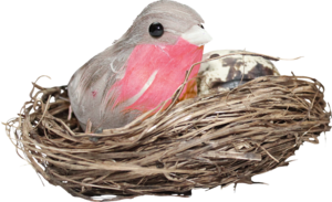 Nest PNG HD Photo PNG Clip art