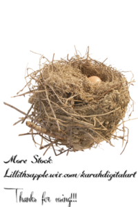Nest PNG HD Quality PNG Clip art