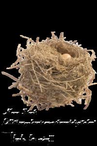 Nest PNG HD Quality PNG Clip art