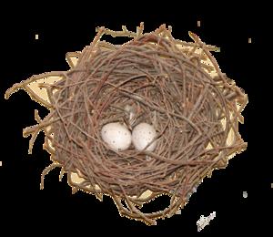 Nest PNG Photos PNG Clip art