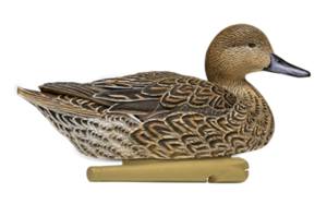 Northern Pintail PNG File PNG Clip art