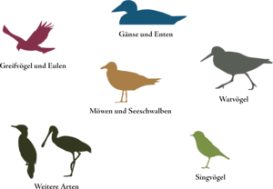 Northern Pintail PNG Free Download PNG Clip art
