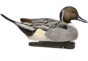 Northern Pintail Transparent Background PNG Clip art