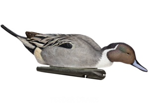 Northern Pintail Transparent PNG PNG Clip art