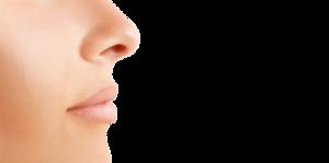 Nose PNG Image PNG Clip art