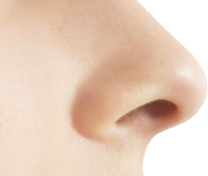 Nose PNG Pic PNG Clip art