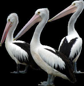 Ocean Birds Background PNG PNG Clip art