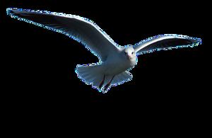 Ocean Birds Download PNG Image PNG Clip art