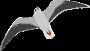Ocean Birds PNG Transparent HD Photo PNG Clip art