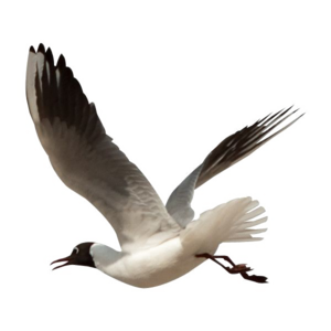 Ocean Birds Transparent PNG PNG Clip art