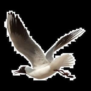Ocean Birds Transparent PNG PNG Clip art