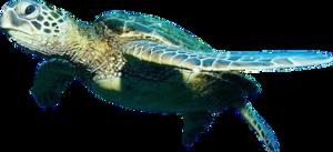 Ocean Fish PNG Free Download PNG Clip art