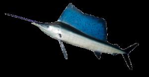 Ocean Fish PNG HD PNG Clip art