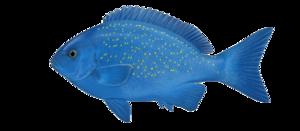 Ocean Fish PNG Photos PNG Clip art