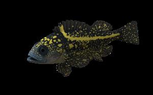 Ocean Fish PNG Pic PNG Clip art