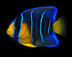 Ocean Fish PNG Transparent Image PNG Clip art