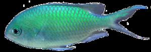 Ocean Fish PNG Transparent PNG Clip art