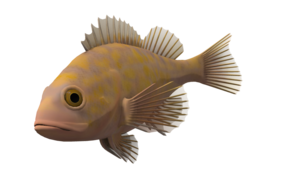 Ocean Fish Transparent Background PNG Clip art
