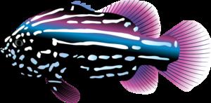 Ocean Fish Transparent PNG PNG Clip art