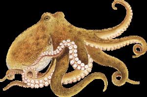 Octopus PNG Transparent PNG Clip art
