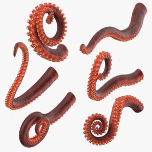Octopus Tentacles Transparent PNG PNG Clip art