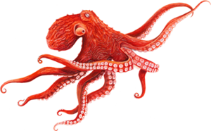 Octopus Transparent Background PNG Clip art