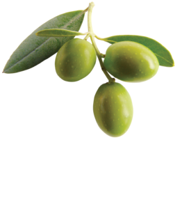Olive PNG Clipart PNG Clip art