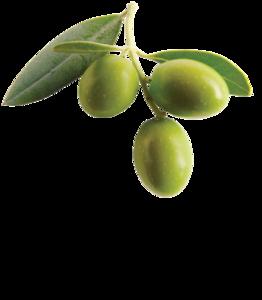 Olive PNG Clipart PNG Clip art