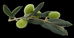 Olive PNG File PNG Clip art