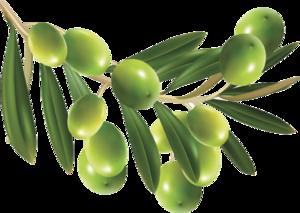 Olive PNG HD PNG Clip art
