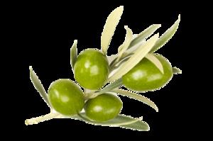 Olive PNG Image PNG Clip art