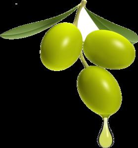 Olive PNG Transparent Image PNG Clip art