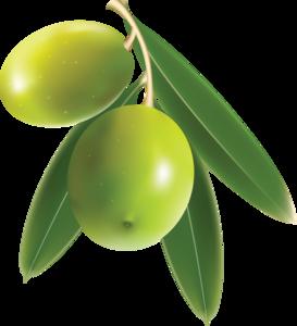Olive Transparent PNG PNG Clip art