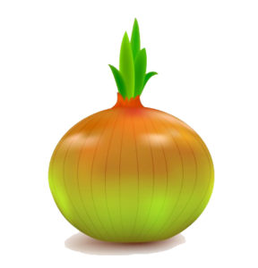 Onion Vector PNG File PNG Clip art