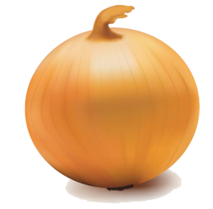 Onion Vector Transparent PNG PNG Clip art