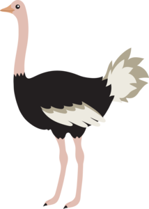 Ostrich PNG Image PNG Clip art