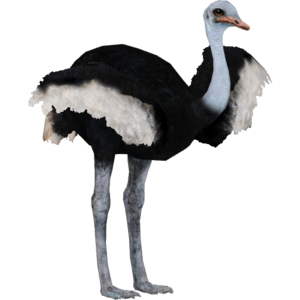 Ostrich PNG Pic PNG clipart