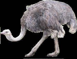 Ostrich Transparent PNG PNG Clip art