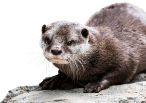 Otter Background PNG PNG Clip art