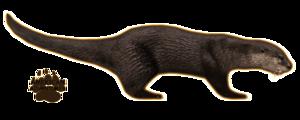 Otter PNG Background Image PNG Clip art