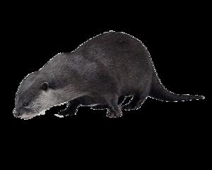 Otter PNG HD PNG Clip art