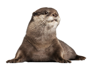 Otter PNG Image PNG images
