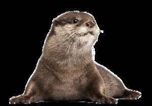 Otter PNG Image PNG Clip art
