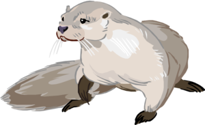 Otter PNG Photo PNG Clip art