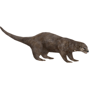 Otter PNG Pic PNG Clip art