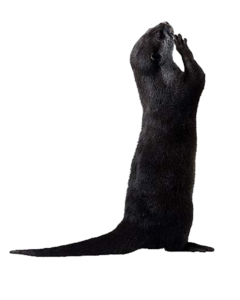 Otter PNG Picture PNG images